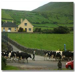 Garveys Farmhouse B&B Kerry